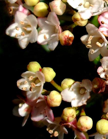 Sarah's flowers.g